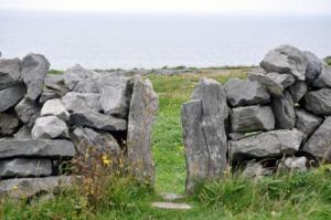 Burrenrockslowres
